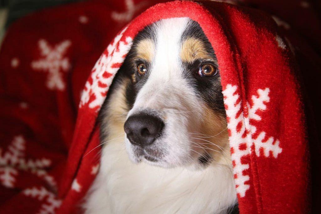 Navidad y Año Nuevo: habrá programación especial en TV para que los perros no sufran la pirotecnia