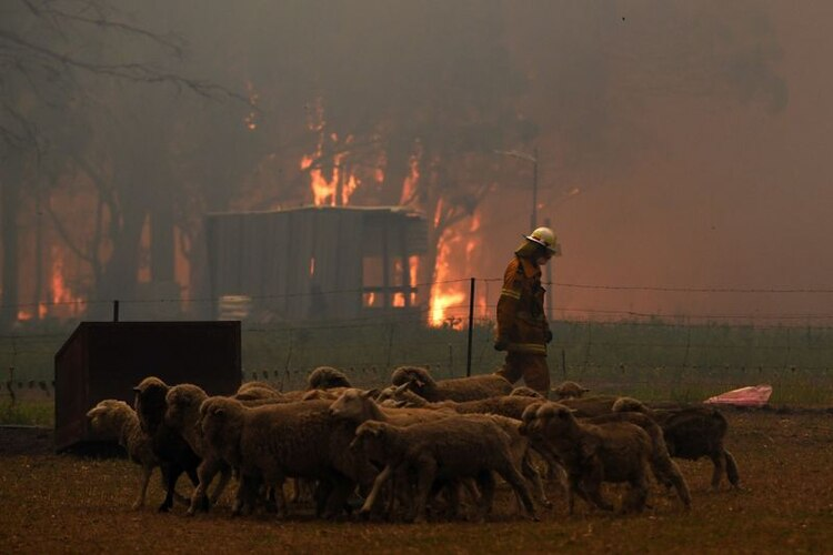 Por qué los incendios en Australia son tan devastadores y no se detienen