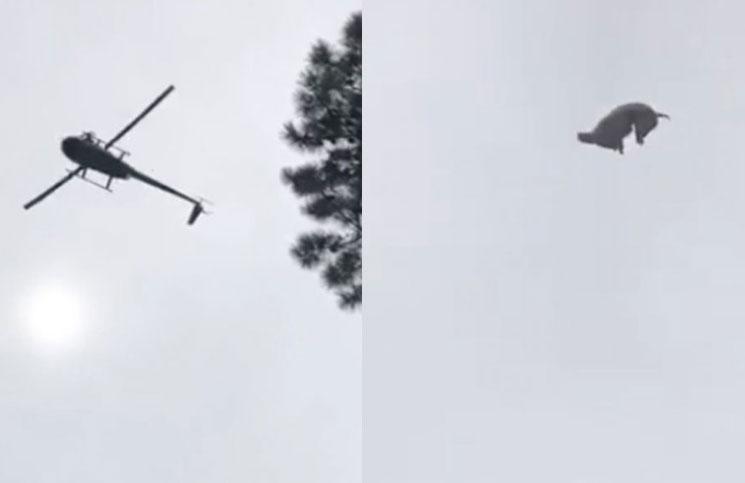 """Polémica en José Ignacio por el animal que tiraron desde un helicóptero: """"El video lo filmé yo"""", aseguró el dueño de Etiqueta Negra"""