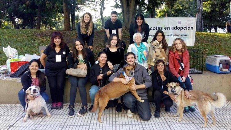 Mascotas en adopción: un labor de amor real que rescata animales desde hace 30 años
