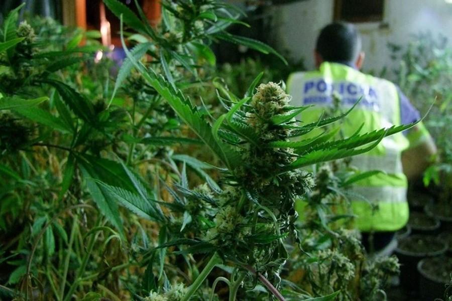Un policía que estaba con licencia, destinaba su tiempo libre a vender cannabis